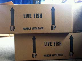 New Saltwater Shipment Arriving Shortly